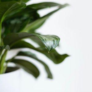 5 tipov, ako vkusne využiť zeleň pri zariaďovaní interiéru