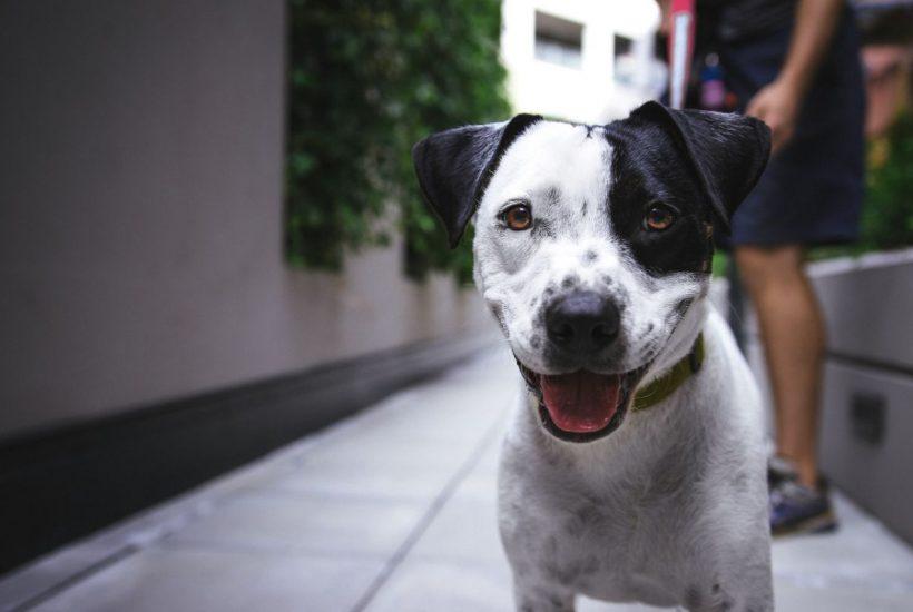 3 dôvody, pre ktoré sa rozhodne oplatí mať psíka